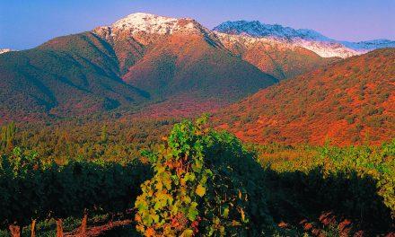Čilės vyno ateitis