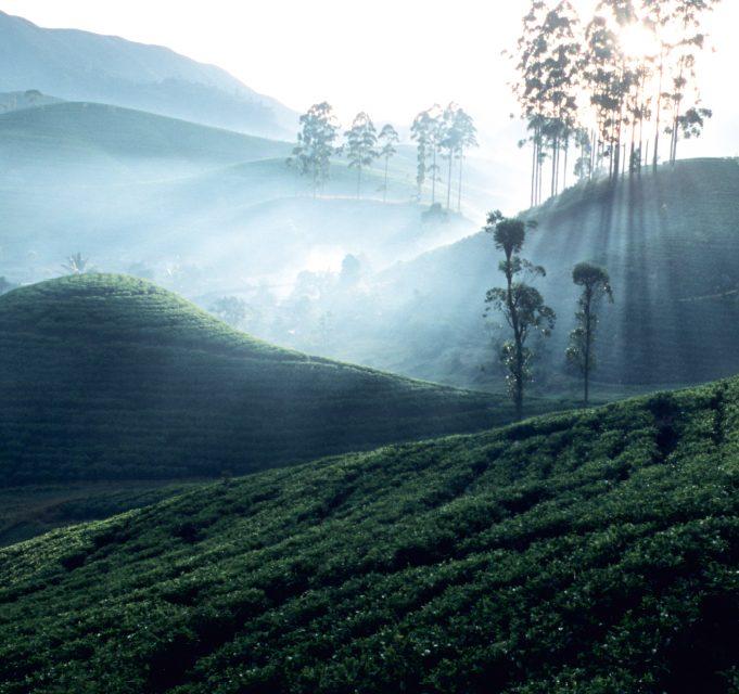 Šri Lanka: žaliąja arbata ir prieskoniais kvepianti sala