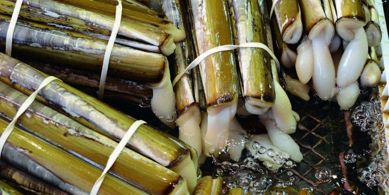 Peileniai – sultingi ir itin lengvai paruošiami moliuskai