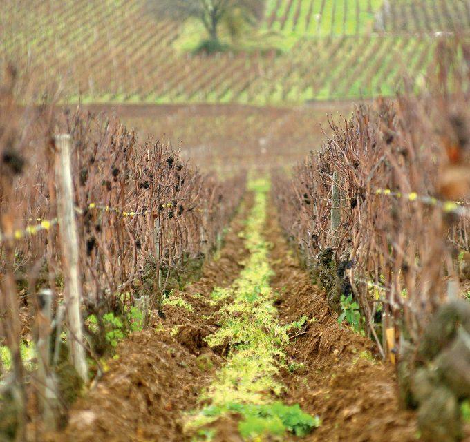Burgundija: pamatyti, pajausti, kad suprastum