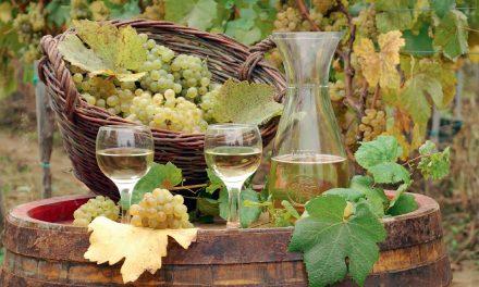 Sauvignon Blanc – vynas, atėjęs išgelbėti
