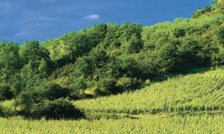 Burgundija, kurios nepažįstate
