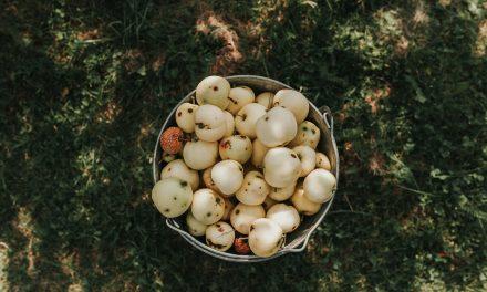 Kodėl svarbu valgyti sezoniškai?