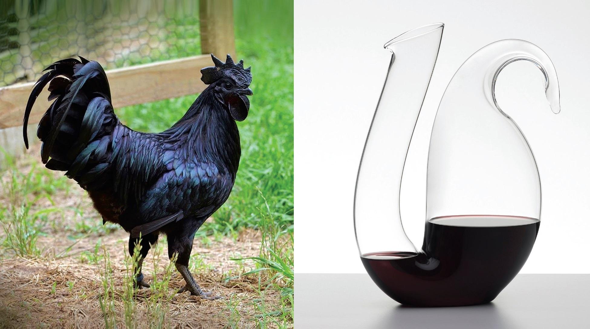 """Dekanteris """"Ayam"""" (diz. Maximilianas Riedelis, gam. """"Riedel"""")"""