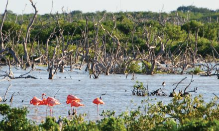 Flamingų pakerėti…