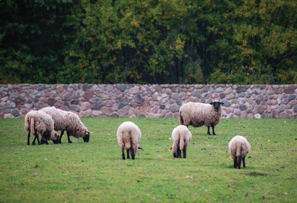 Ilzenbergo ūkyje driekiasi daugiau nei 500 ha dirbamųjų laukų ir ganyklų