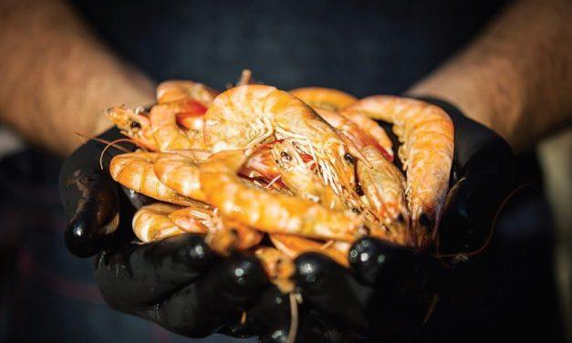 """""""Local Ocean"""" – vienintelis krevečių auginimo ūkis Lietuvoje ir Baltijos šalyse"""