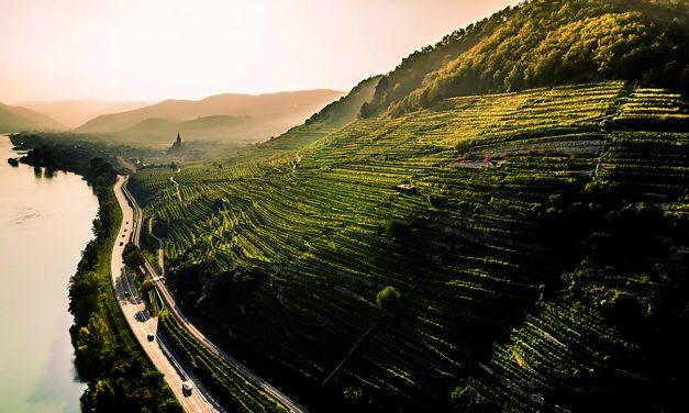 Kokie 2020-ieji buvo vyno pasaulyje? Įdomūs…